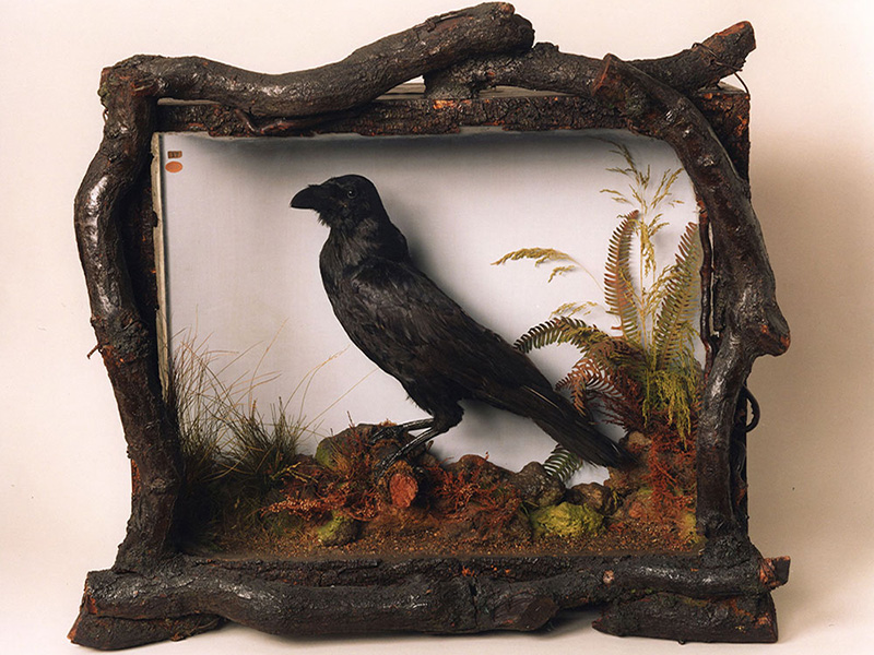 The Life and Literary Legacy of Grip: Philadelphia's Pet Raven